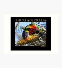 Cover of Australian bird calendar Art Print