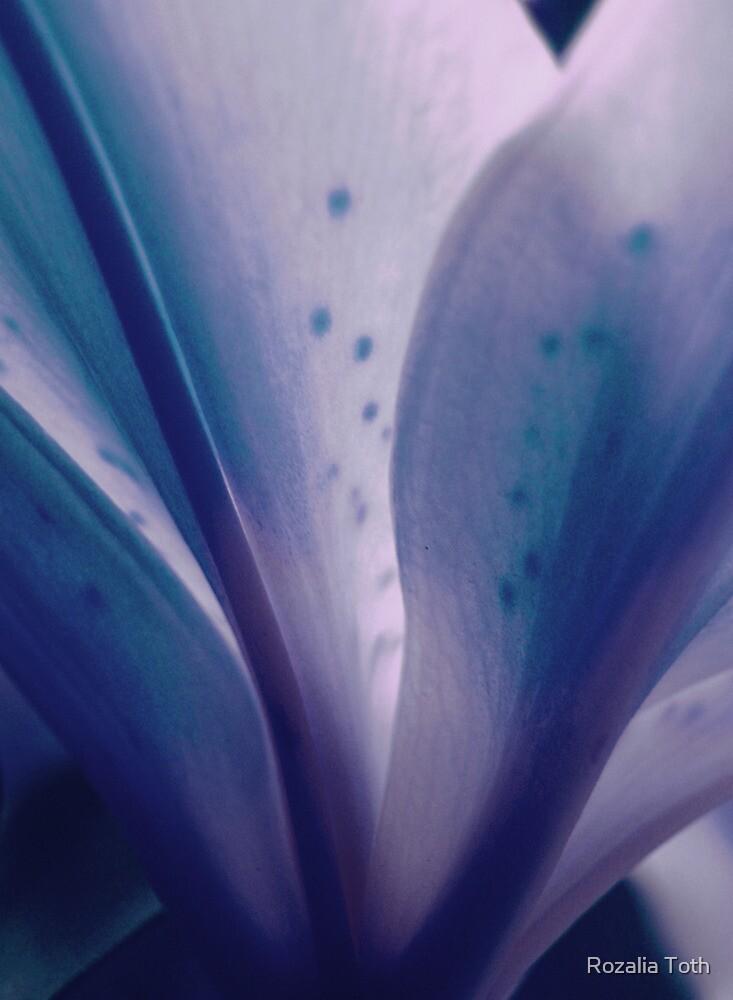 Peacefulness by Rozalia Toth