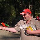 King Parrot, Crimson Rosella, feeding. by johnrf