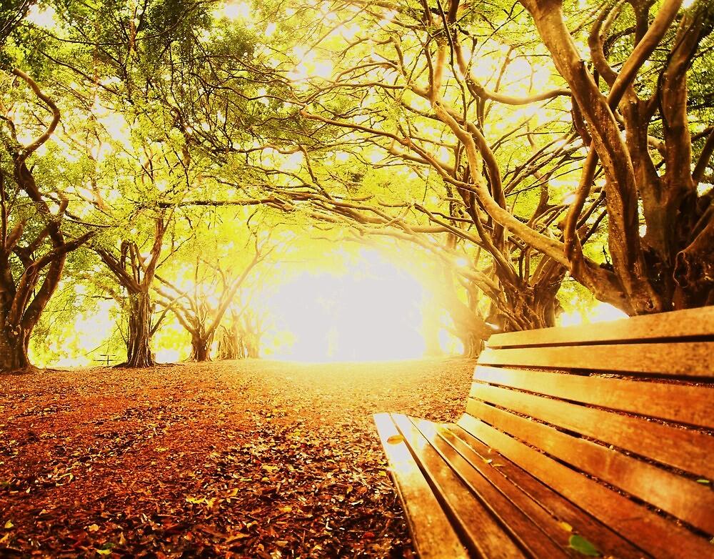 wirreanda park collection 1 by rlkington