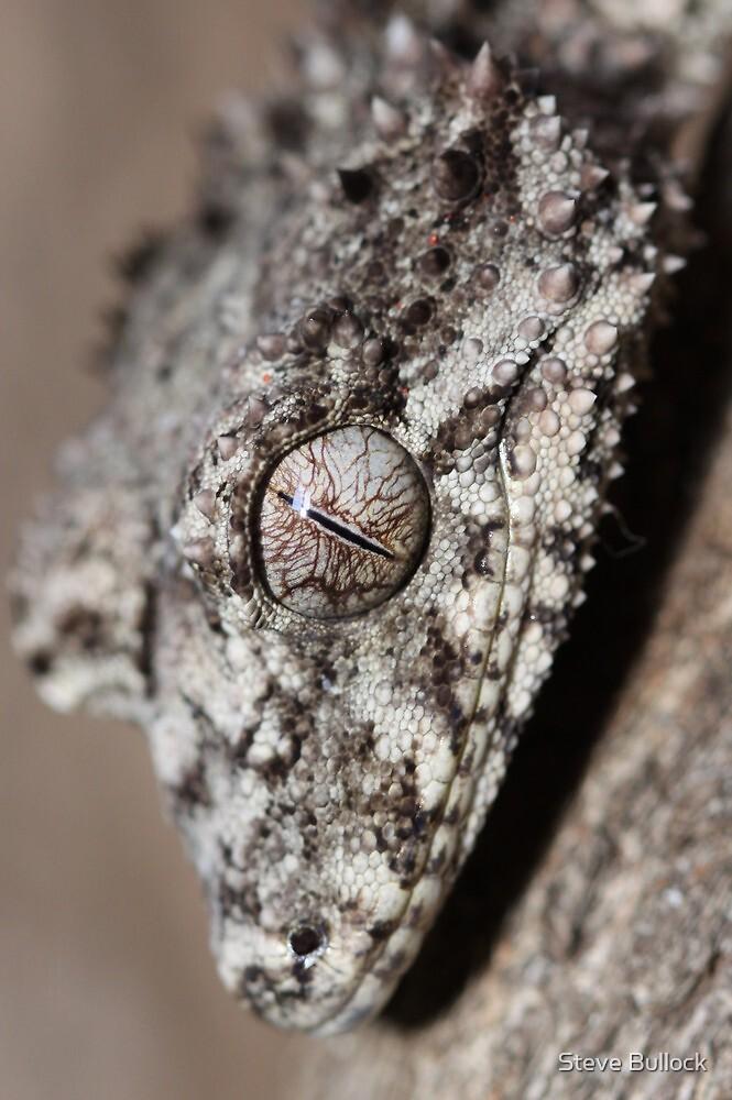 Rough Throated Leaf Tail by Steve Bullock