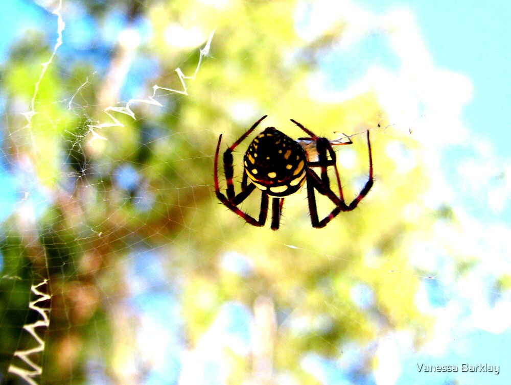 Spider Orb by Vanessa Barklay