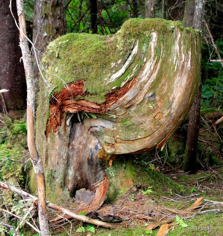 Once I Was a Tree by Sally Haldane