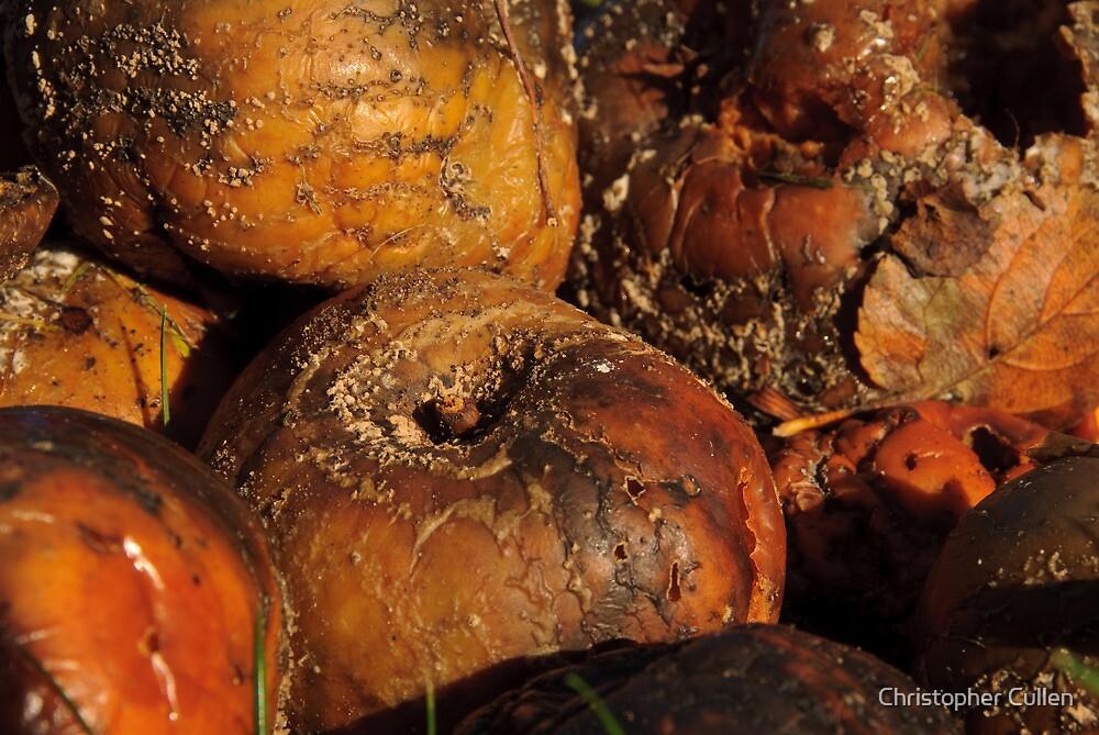 Fallen Apples by Christopher Cullen