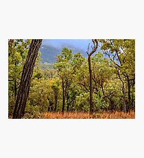 Australian Bush Photographic Print