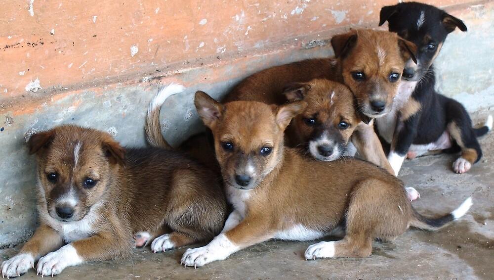 puppies.... by Saroj Swain