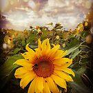 Shimmer Sunflower  by TheTeaFairy
