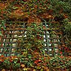 twin window autumn by Mustafa UZEL