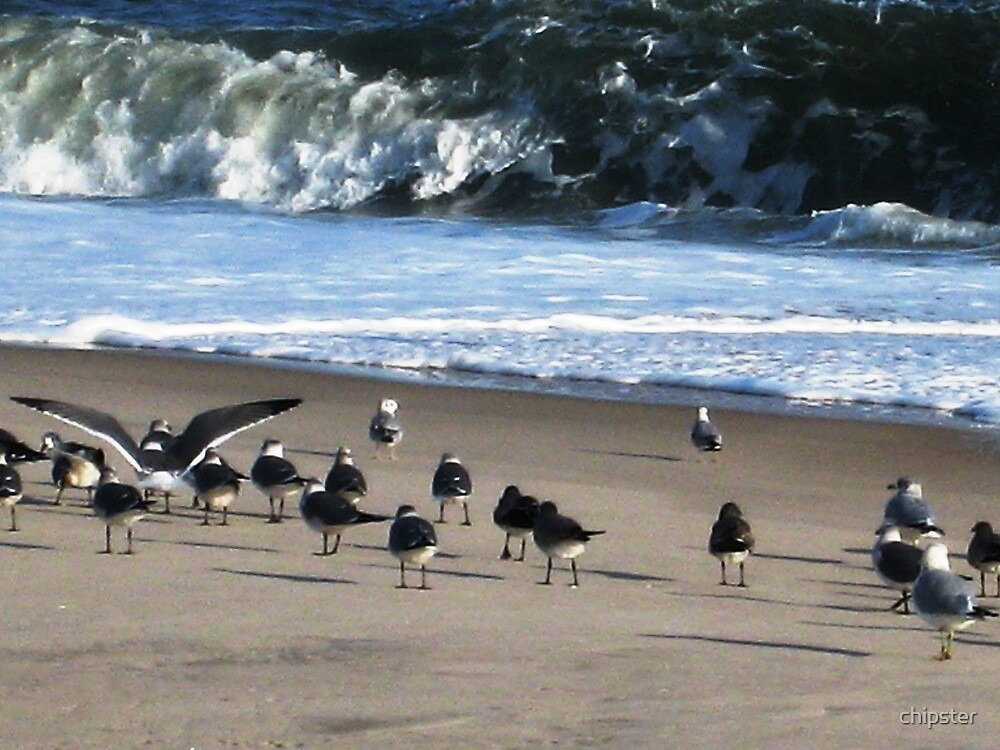 Gulls on a Fire Island beach by chipster