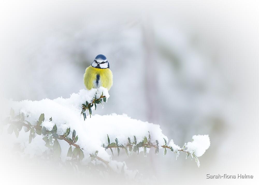 Winter Perch by Sarah-fiona Helme