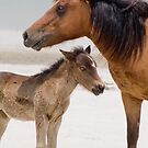 """""""Watching Over"""" - wild horses on beach by ArtThatSmiles"""