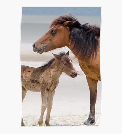 """""""Watching Over"""" - wild horses on beach Poster"""