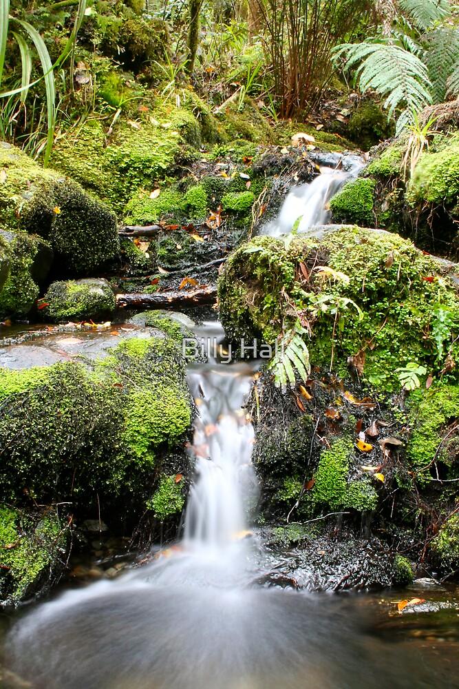 South Island stream - New Zealand by Billy Hall