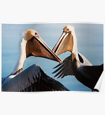 """""""Chatting Pelicans"""" - animated brown pelicans Poster"""