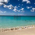 Aruba - Oranjestad - Eagle Beack - brown pelicans by renprovo