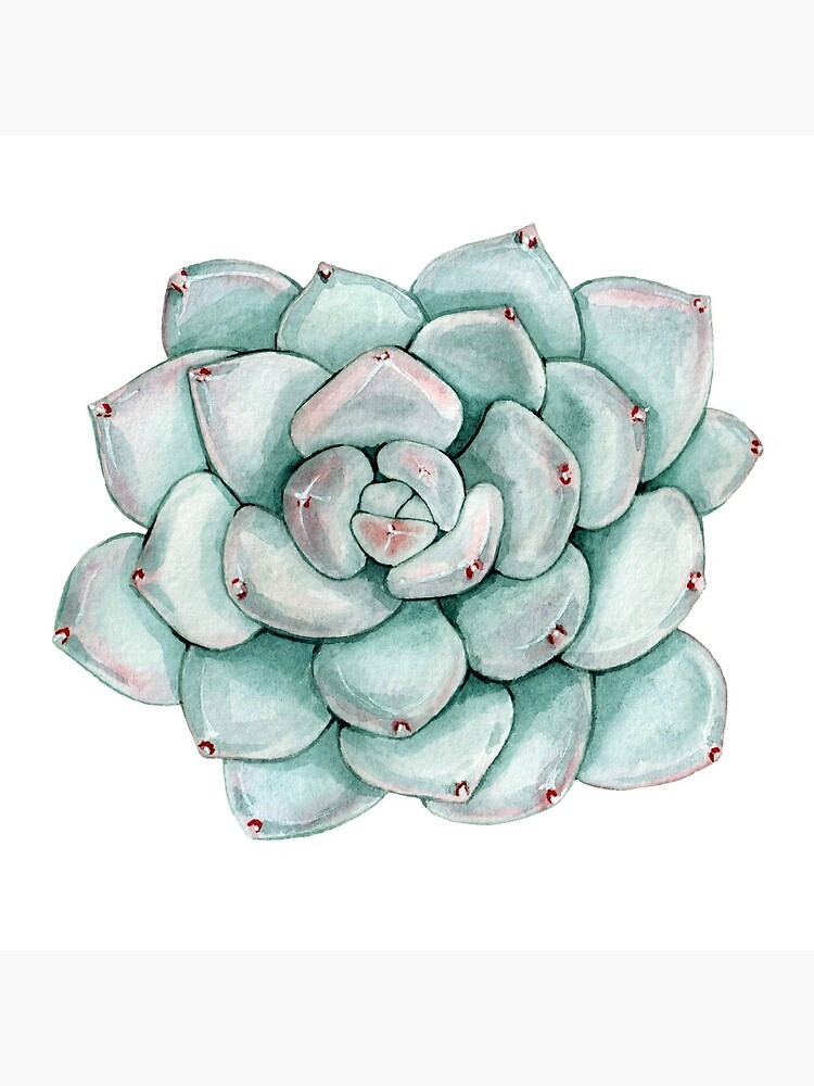 Succulent, watercolor by SouthPrints