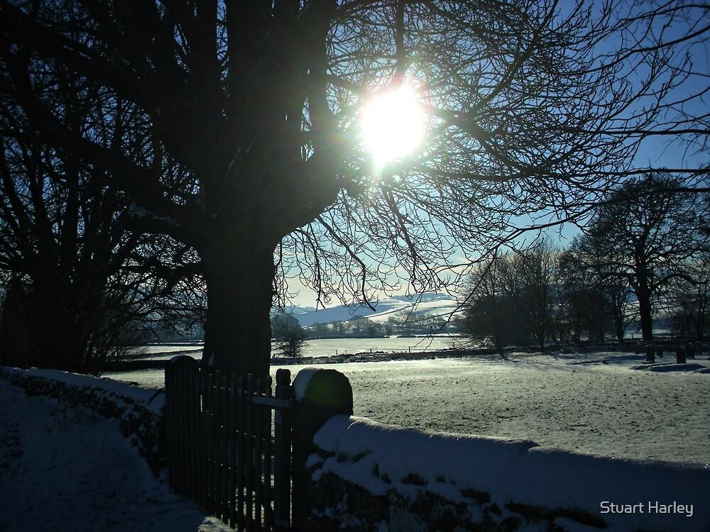 Field of Snow by Stuart Harley