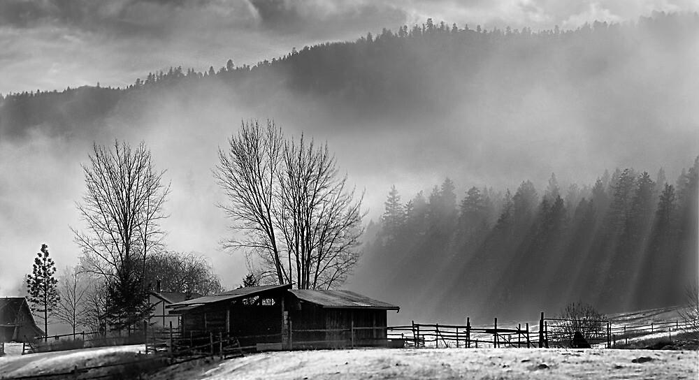 Morning Glory (BW) by John Poon