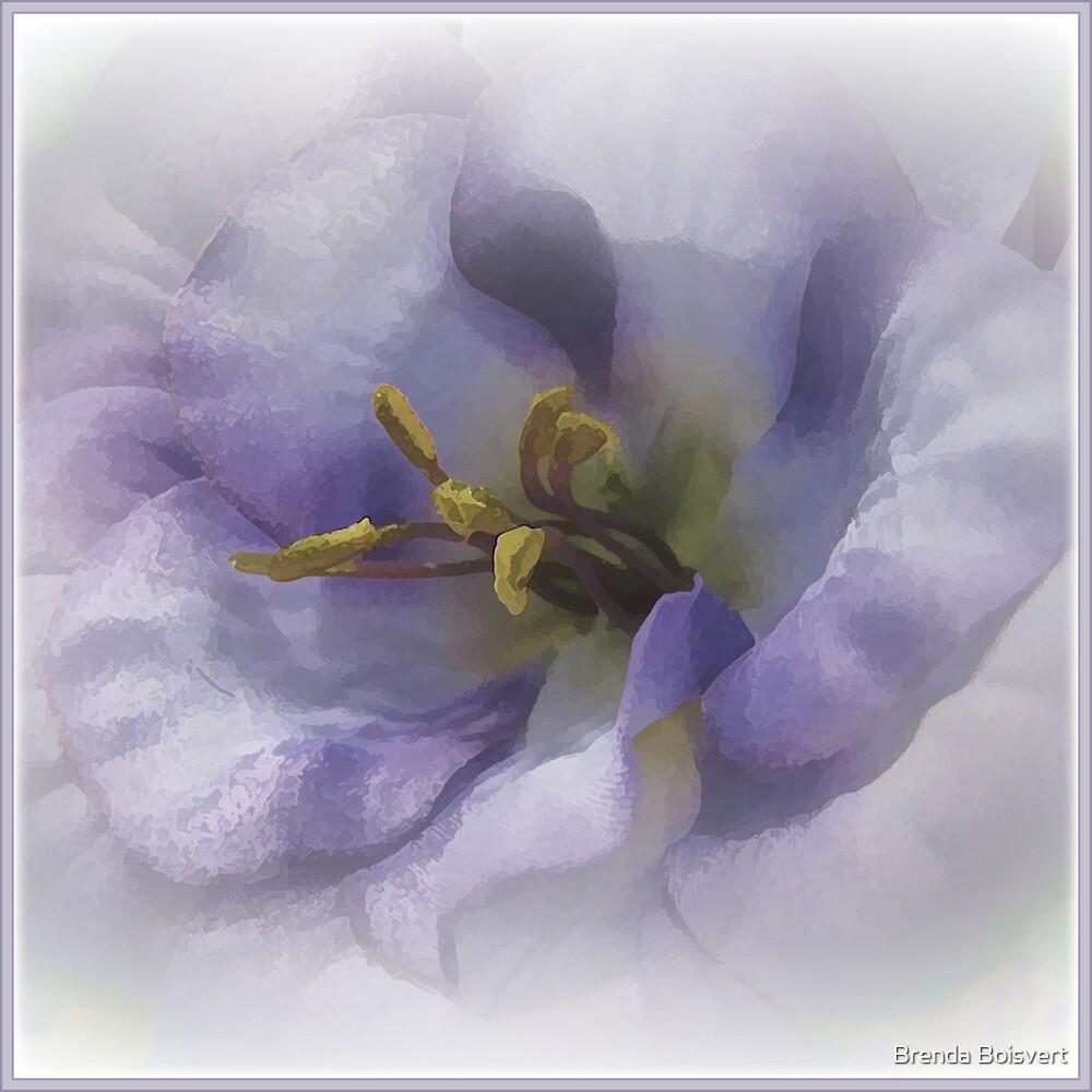 Soft and Dreamy by Brenda Boisvert