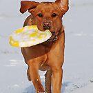 Harvey With A Frisbee by Mark Bateman