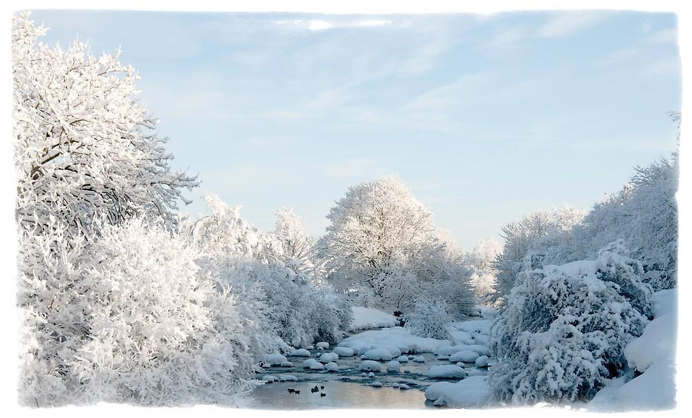Winter Wonderland by Mark Denham