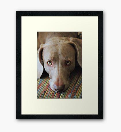 """Please Don't Leave Me Behind"" Framed Print"