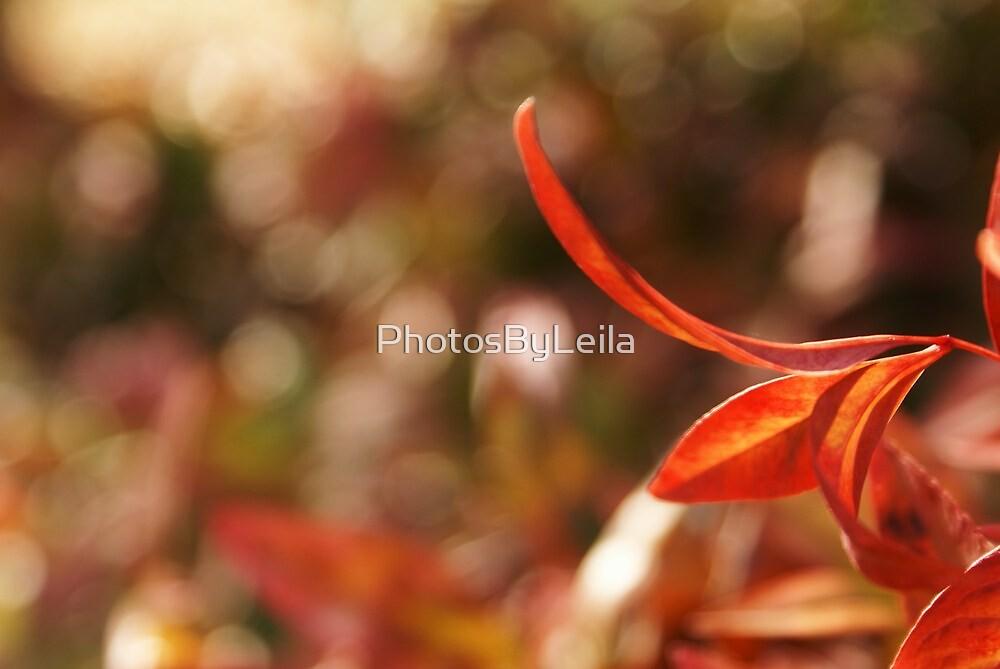 Edge of Fall by PhotosByLeila
