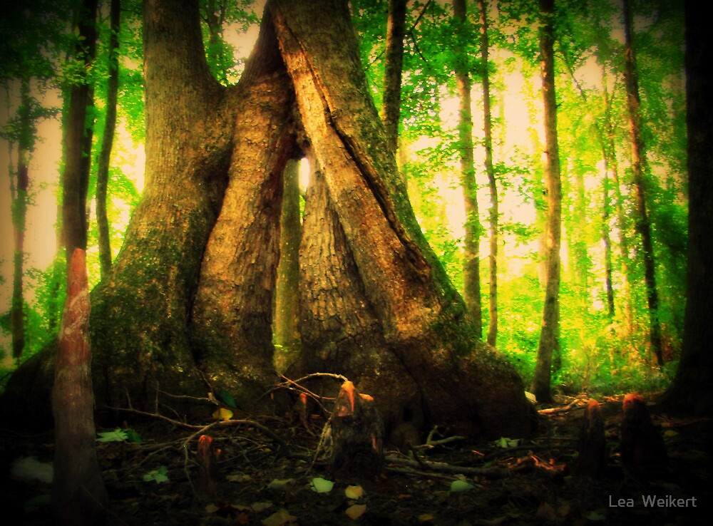 Tree Hugs and Sunlight Kisses by Lea  Weikert