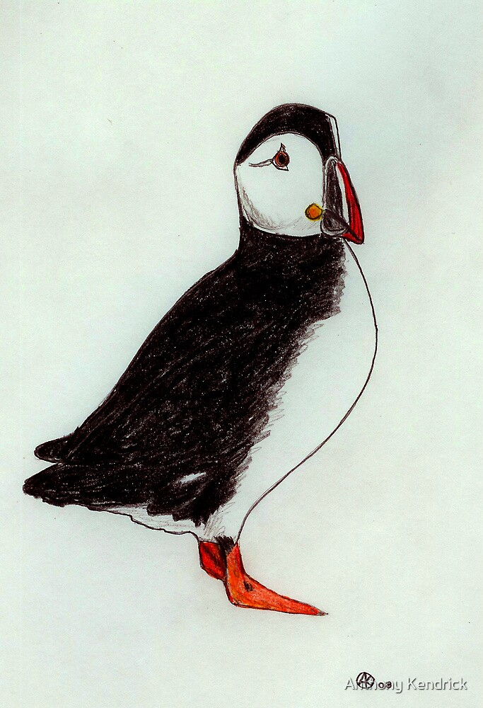 The Puffin (Atlantic Puffin) by Anthony Kendrick