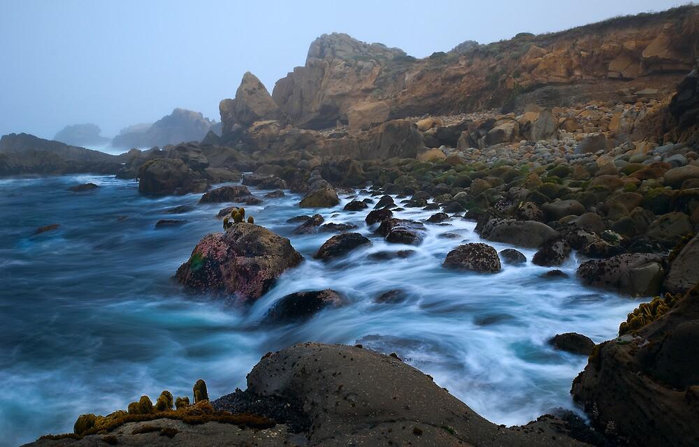 Salt Point State Park, CA by Zane Paxton
