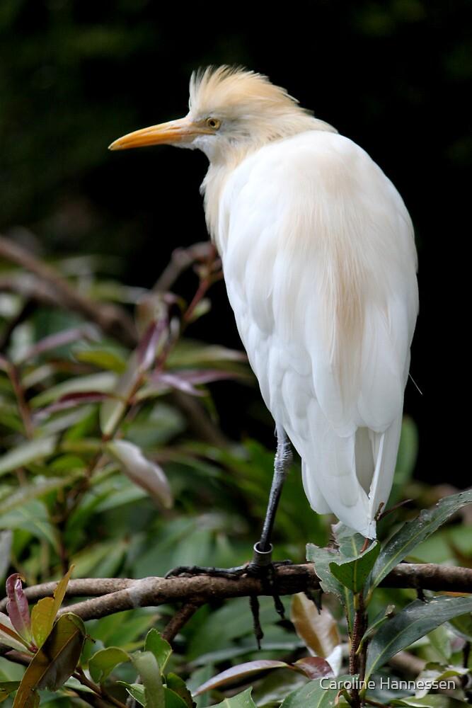Bird by Caroline Hannessen