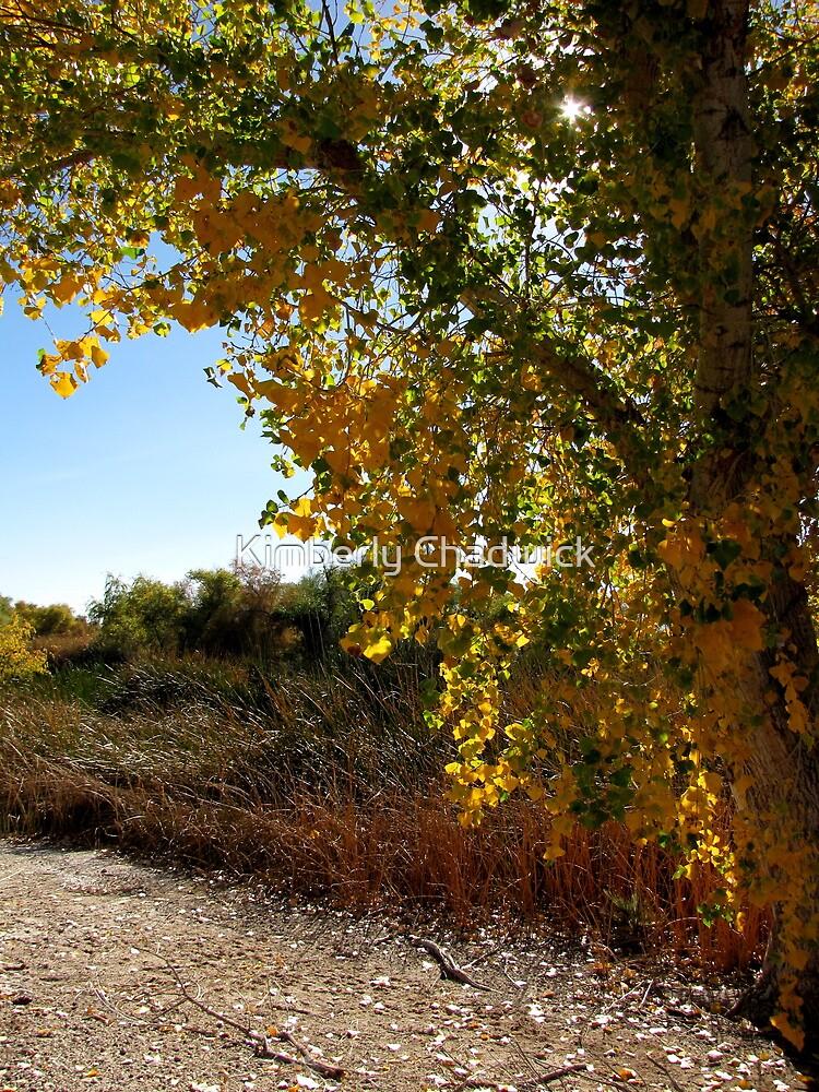 Autumn in Arizona by Kimberly Chadwick