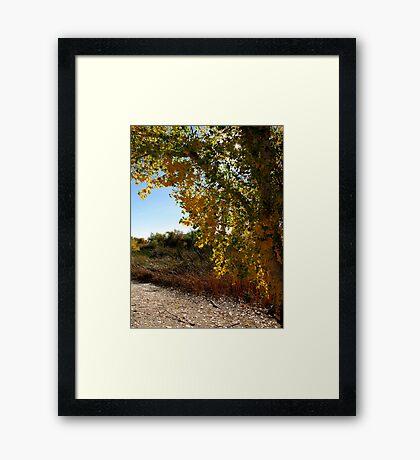Autumn in Arizona Framed Print
