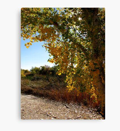Autumn in Arizona Canvas Print
