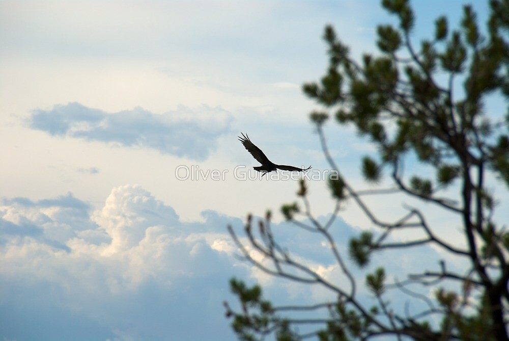 Bird in the sky by Oliver Gunasekara