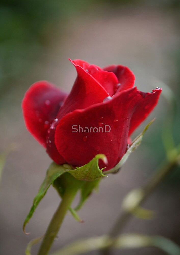 My Sweet Love by SharonD