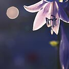 hippeastrum - - let there be light by Aimelle