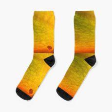 come on! Socks