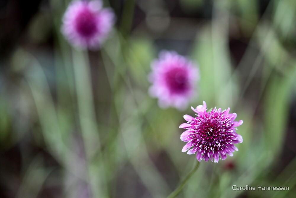 Purple Flower 2 by Caroline Hannessen