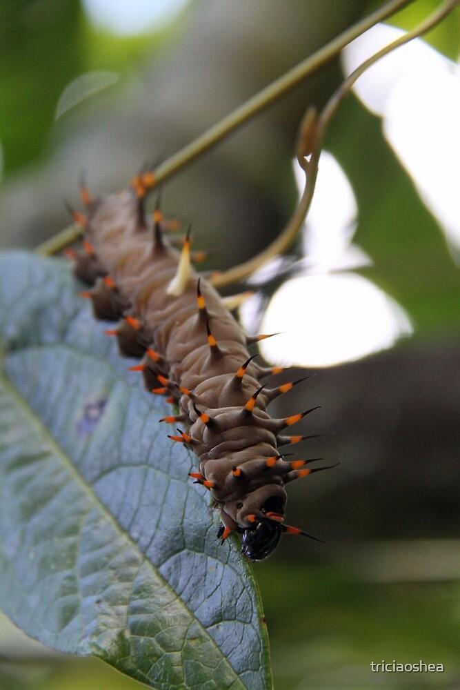 Cairns Birdwing Caterpillar by triciaoshea