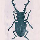 Beetle, Three by Sybille Sterk