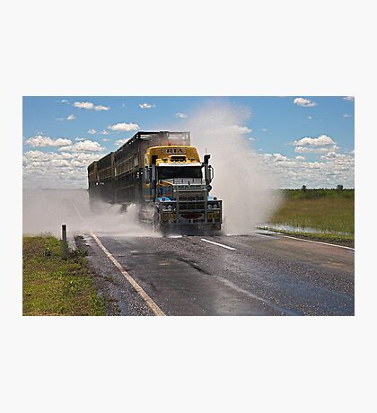 Cattle Truckin Photographic Print