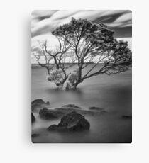 Tumultuous strikes Canvas Print