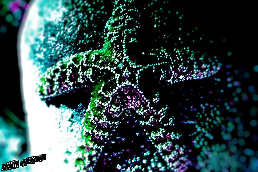 Rainbow Starfish by Cody Dykeman