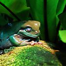 Sleeping Frog by Karina Kaiser