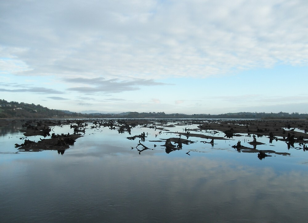 The Gearagh - Lee River  Cork by lindart48