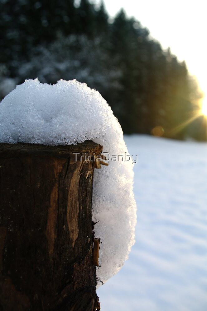 Covered with snow by TriciaDanby
