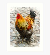 Dignified Art Print
