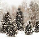 Snow Pines by Jessica Jenney