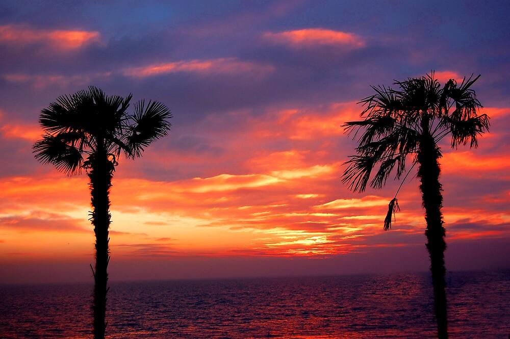 Palm Beach by Richard Fox